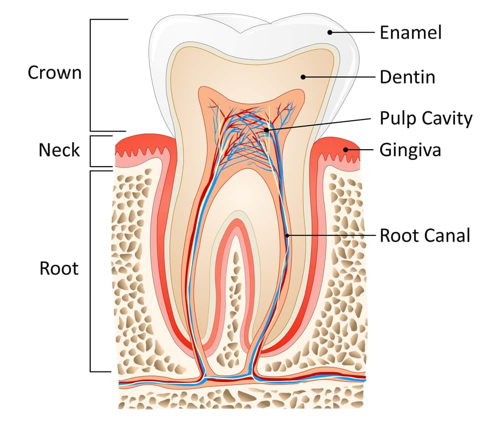 the three ways of performing root canal operation on a tooth Why are sealers used along with gp for root canal obturation the silver present in the powder may leach out and stain the tooth later so after placement the trouble shoots and the ways they are overcome.